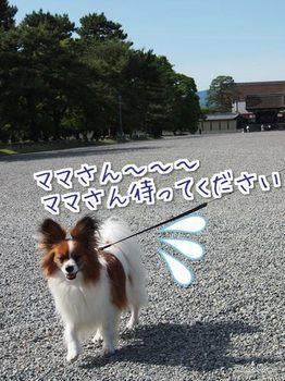京都②.jpg