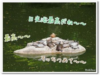京都⑦.jpg