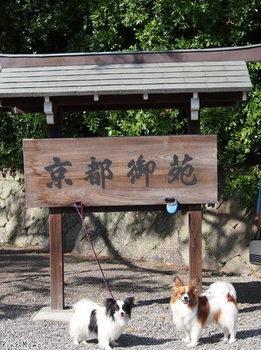 京都⑧.jpg