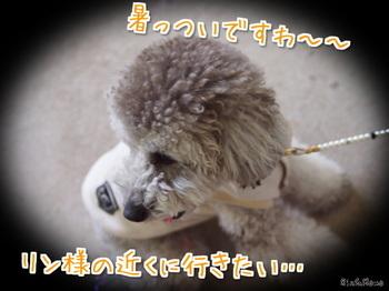 動物①.jpg