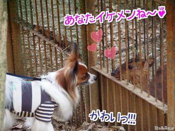 動物⑨.jpg