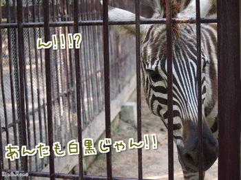 動物⑬.jpg