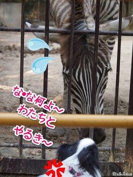 動物⑭.jpg