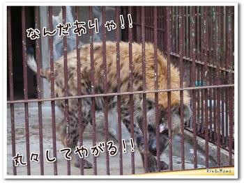 動物⑮.jpg