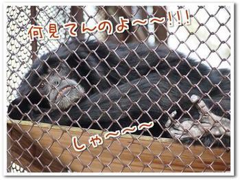 動物10.jpg