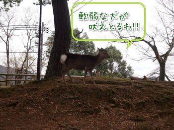 奈良⑨.jpg