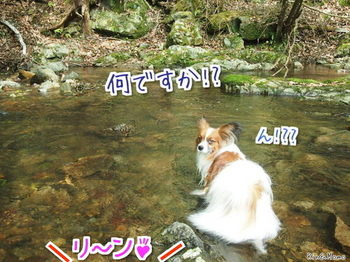 川⑤.jpg