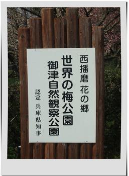梅公園1.jpg