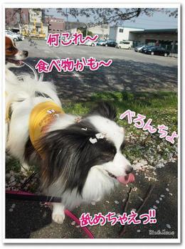 武庫川⑧.jpg