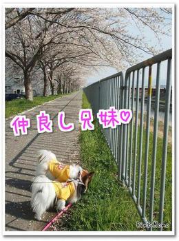 武庫川⑩.jpg