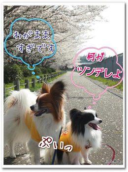 武庫川⑪.jpg