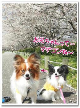 武庫川4.jpg