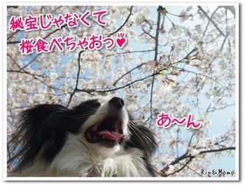 武庫川9.jpg