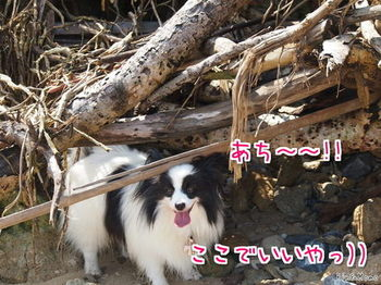 沖縄⑱.jpg