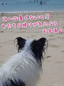 沖縄11.jpg