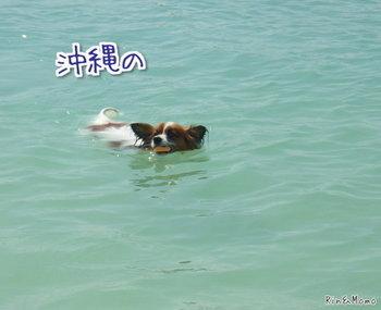 沖縄4.jpg
