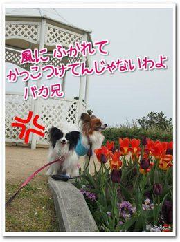 淡路島9.jpg
