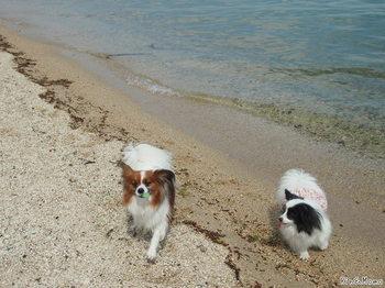 琵琶湖6.jpg