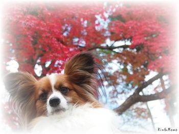篠山9.jpg