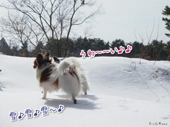 米子⑤.jpg
