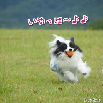 蒜山7.jpg