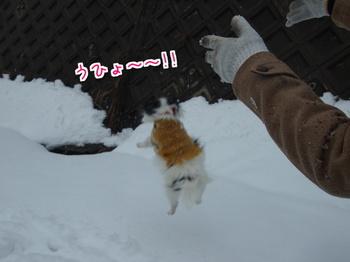 雪山8.jpg