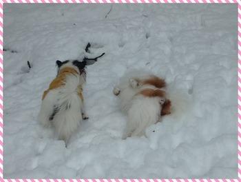 雪10.jpg