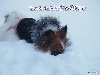 雪9.jpg