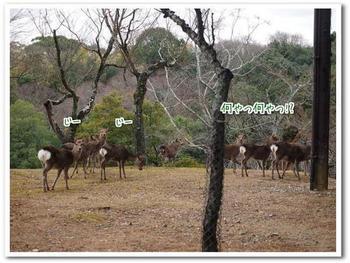 鹿②.jpg