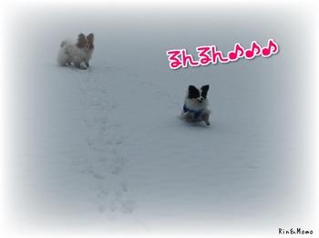 yukio3.jpg