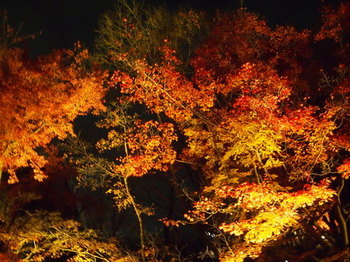 京都⑨.jpg