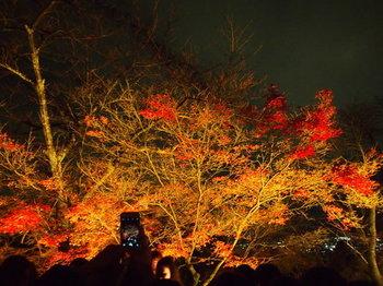 京都6.jpg