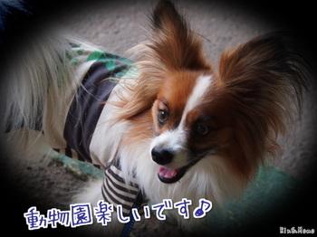 動物②.jpg