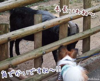 動物⑧.jpg