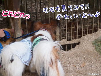 動物⑪.jpg