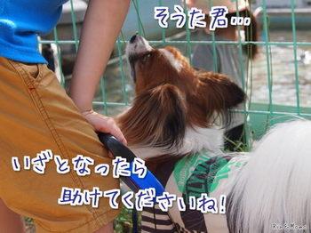 動物11.jpg