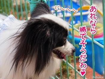 動物14.jpg