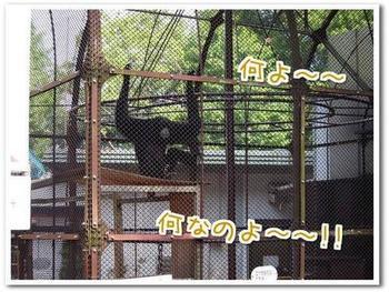 動物9.jpg