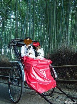 嵐山6.jpg