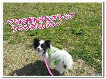 散歩10.jpg