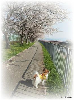 武庫川⑤.jpg