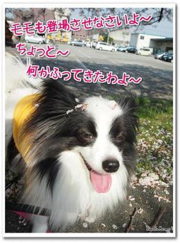 武庫川⑦.jpg