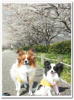 武庫川3.jpg