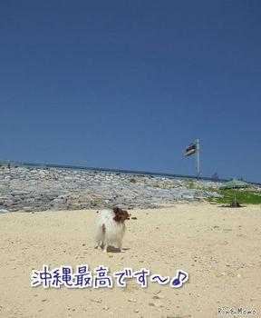 沖縄④.jpg