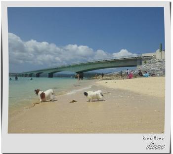 沖縄⑨.jpg