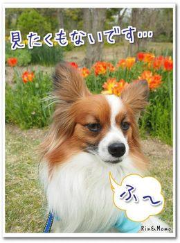 淡路島5.jpg