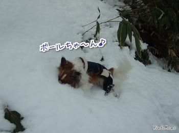 雪6.jpg